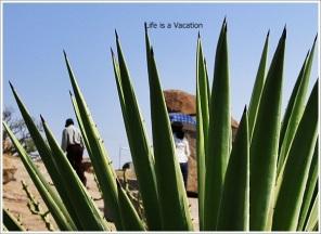 Hampi Cactus View