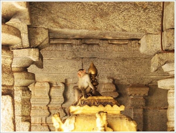 Hampi Virupaksha Temple Monkey