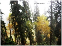 Naranag Fall Colours