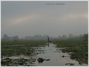 Dal Lake- Floating Market