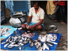 Kolkata Fish Seller