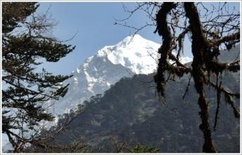 Goechala-Pandim View